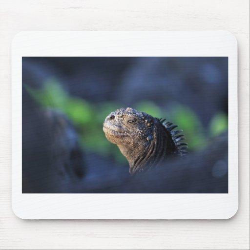 Islas de las Islas Galápagos de la iguana marina Alfombrillas De Ratones