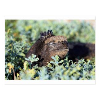 Islas de las Islas Galápagos de la iguana que toma