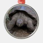 Islas de las Islas Galápagos de la tortuga gigante Ornamentos Para Reyes Magos