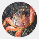 Islas de las Islas Galápagos del cangrejo del Pegatinas Redondas