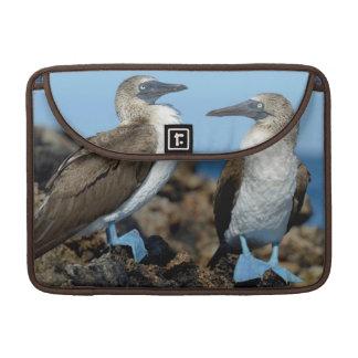 Islas de las Islas Galápagos, isla de Isabela Funda Para Macbook Pro