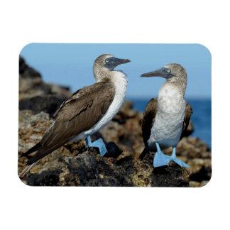 Islas de las Islas Galápagos, isla de Isabela Iman Rectangular