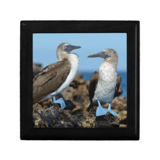 Islas de las Islas Galápagos, isla de Isabela Joyero Cuadrado Pequeño