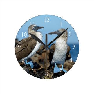 Islas de las Islas Galápagos, isla de Isabela Reloj Redondo Mediano