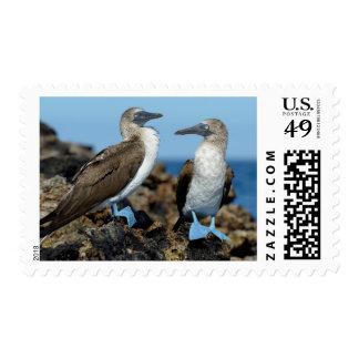 Islas de las Islas Galápagos, isla de Isabela Sello