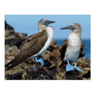 Islas de las Islas Galápagos, isla de Isabela Tarjeta Postal