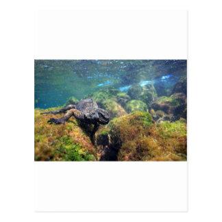 Islas de las Islas Galápagos subacuáticas de la ig