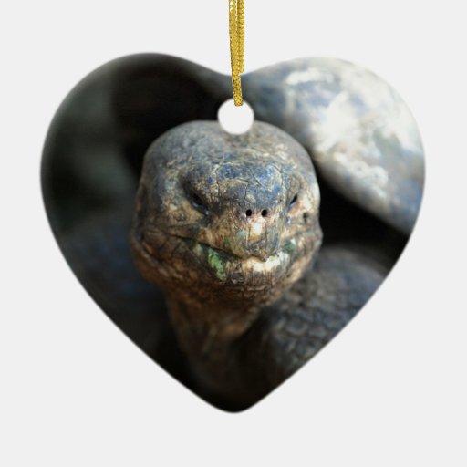 Islas de las Islas Galápagos viejas de la tortuga Adorno De Cerámica En Forma De Corazón