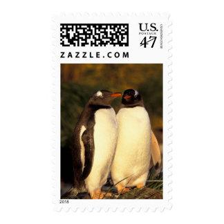 Islas de Malvinas. Pingüinos de Gentoo.  Estampillas