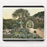 Islas de Scilly, abadía de Tresco, arcos viejos, C Tapetes De Ratones