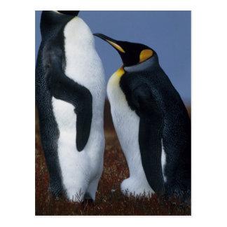 Islas Malvinas. Soporte de dos pingüinos de rey Tarjeta Postal