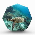 Islas subacuáticas de Ampat del Raja de la tortuga