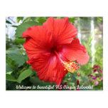 Islas Vírgenes de los E.E.U.U. - hibisco Tarjeta Postal