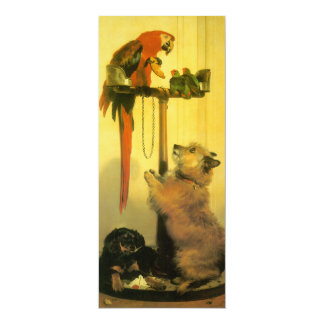 Islay, Tilco, a Macaw and 2 Love Birds by Landseer 4x9.25 Paper Invitation Card