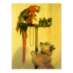 Islay, Tilco, a Macaw and 2 Love Birds by Landseer Postcard