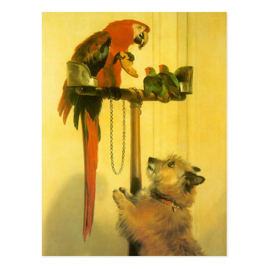 Islay, Tilco, a Macaw and Love Birds by Landseer Postcard