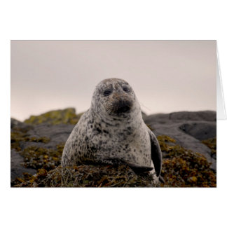 Isle of Skye Greeting Cards