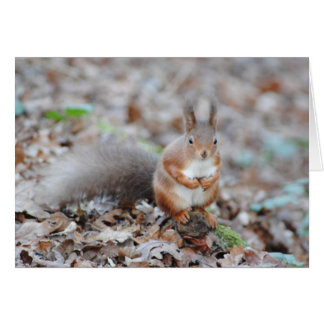 Isle of Wight Red Squirrel Card