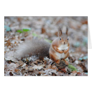 Isle of Wight Red Squirrel Greeting Cards