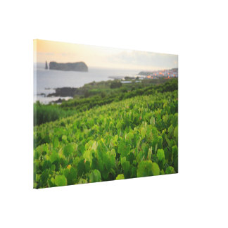 Islet and Vineyards Canvas Print