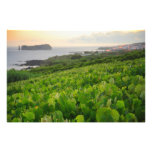 Islet and Vineyards Photo Art