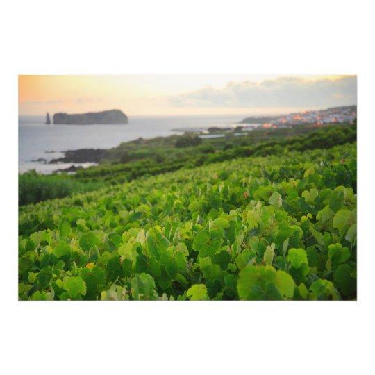 Islet and Vineyards Photo Print