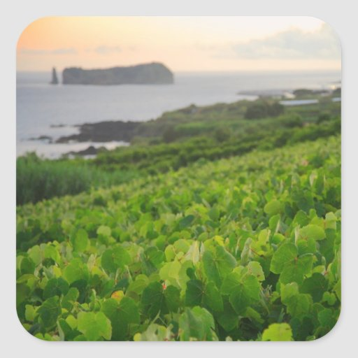 Islet and Vineyards Square Sticker