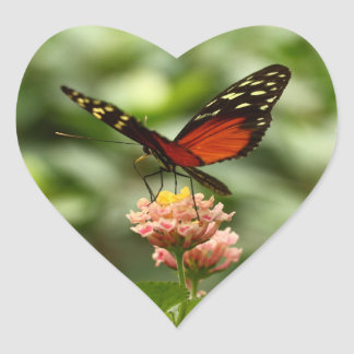 Ismenius Tiger starting Heart Sticker