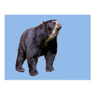 Isolated Andean bear Postcard