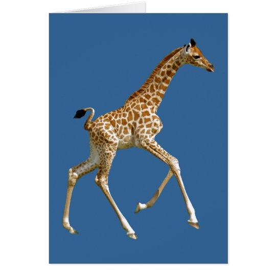 Isolated baby giraffe running card