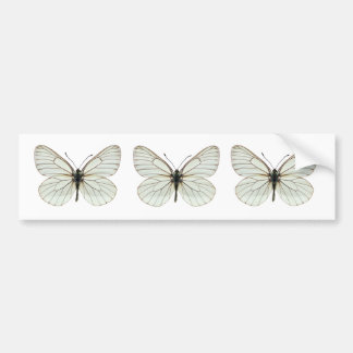 Isolated Black-veined White butterfly Car Bumper Sticker
