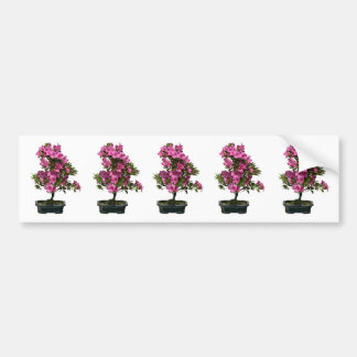 Isolated bonsai rhododendron blooming bumper sticker