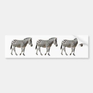 Isolated Burchell Zebra Bumper Sticker
