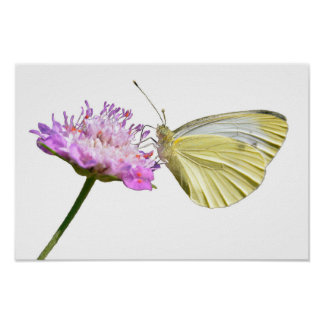 Isolated butterfly feeding on flower poster