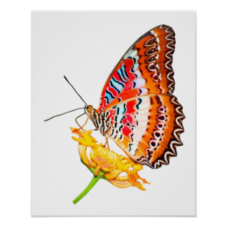 isolated cethosia butterfly on flower poster