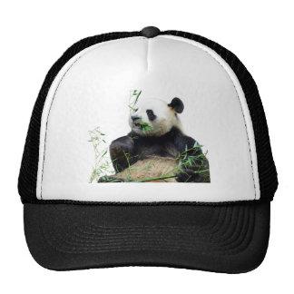 Isolated giant panda eating bamboo trucker hat