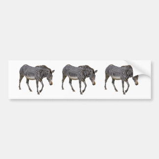 Isolated Grevy zebra Car Bumper Sticker