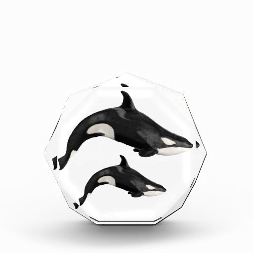 Isolated killer whale acrylic award