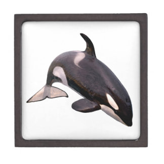 Isolated killer whale jumping jewelry box