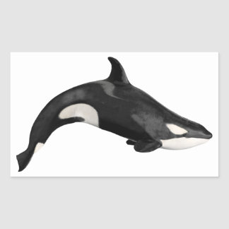 Isolated killer whale rectangular sticker