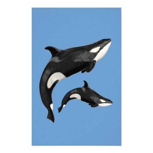 Isolated killer whale stationery