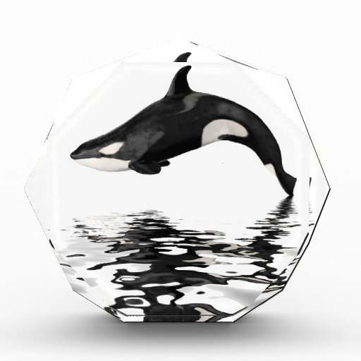 Isolated killer whale with reflection awards