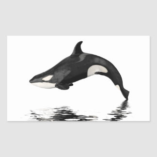Isolated killer whale with reflection rectangular sticker