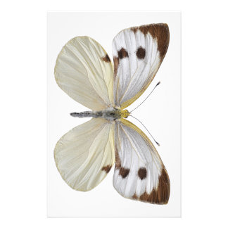 Isolated Large White butterfly PNG Stationery