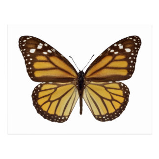 Isolated monarch butterfly PNG Postcard