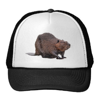 Isolated North American Beaver Trucker Hat