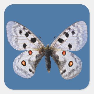Isolated parnassius apollo square sticker