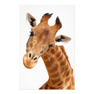 Isolated portrait of giraffe PNG Stationery