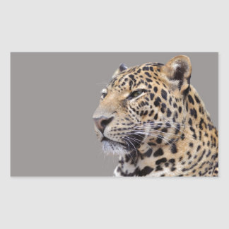Isolated portrait of Leopard Rectangular Sticker