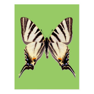 Isolated Scarce Swallowtail butterfly Postcard